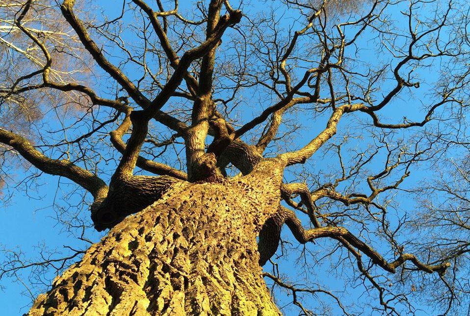 Samordning trädvårdsplan