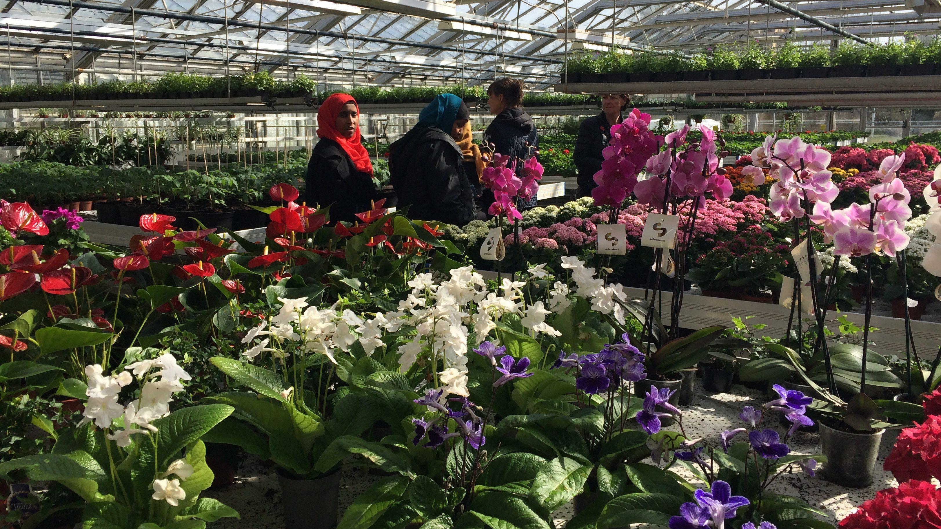 Studiecirkel i odling hemma