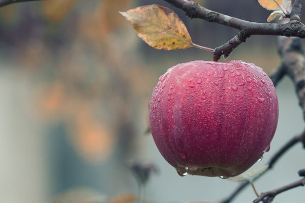 Frukt, frukt, frukt!