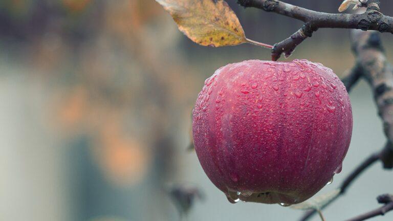 Fruktträdsbeskärningskurs mars 2020!